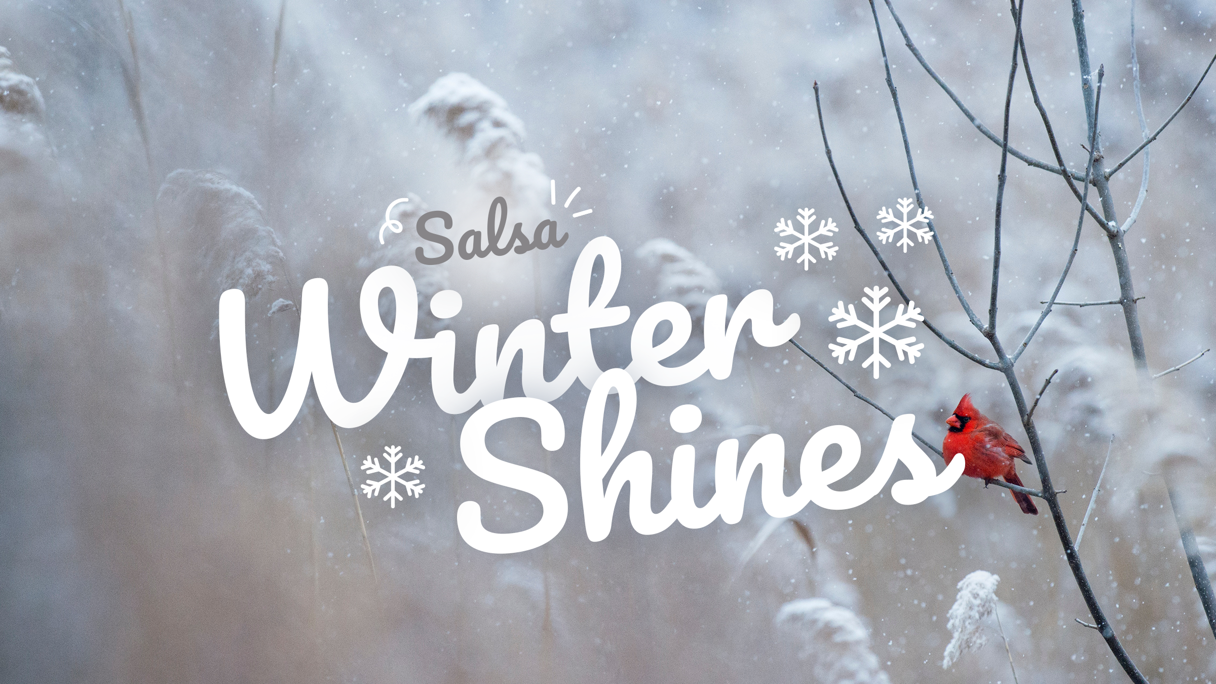 Salsa winter shines workshops